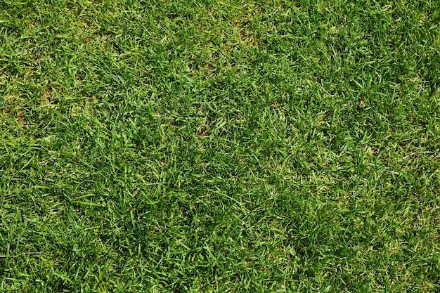 Textura de grama verde fresca. fundo natural, espaço para texto Foto Premium