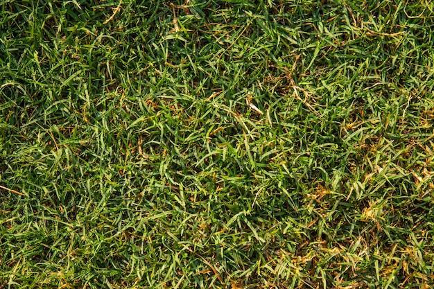 Textura de grama verde pode ser usada como plano de fundo Foto Premium