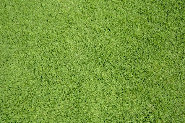 Textura de grama verde Foto Premium