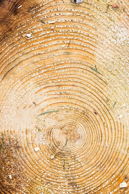 Textura de madeira com anéis de árvores Foto Premium