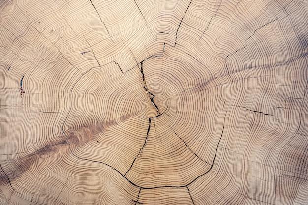 Textura de madeira cortada velha Foto Premium