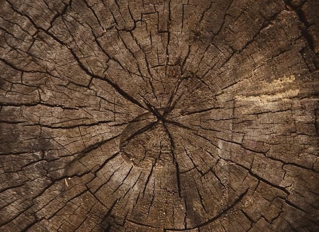 Textura de madeira de tronco de árvore cortada, anéis de árvores, textura de fundo close-up Foto Premium