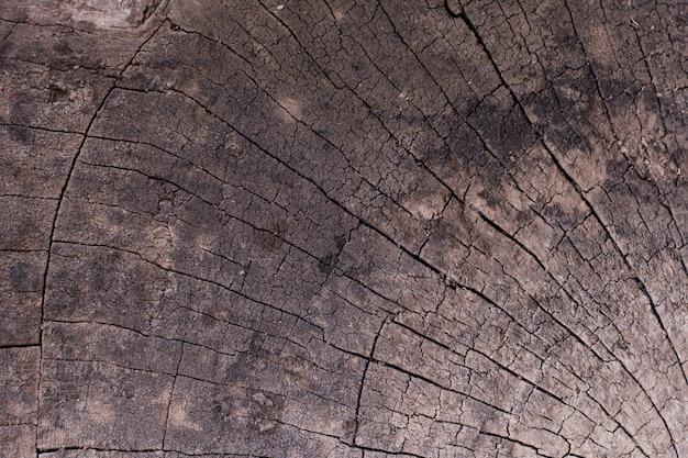 Textura de madeira natural de tronco de árvore cortado, close-up Foto Premium