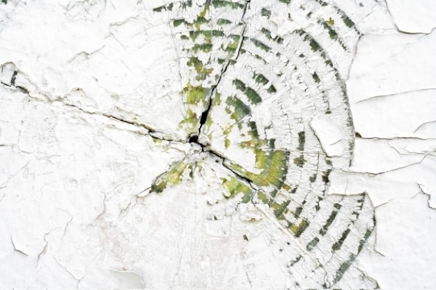 Textura de madeira rachada Foto gratuita