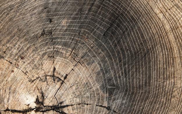 Textura de madeira toco de fundo idade da madeira Foto Premium