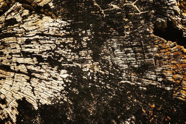 Textura de madeira velha de madeira de coto rachado Foto gratuita