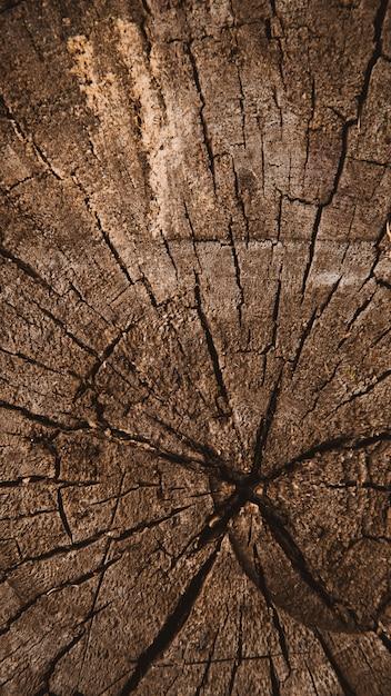 Textura de madeira vertical de tronco de árvore cortada, anéis de árvores, textura de fundo close-up Foto Premium