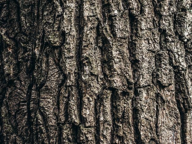 Textura de madeira. Foto Premium