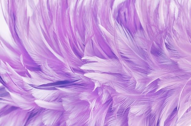 Textura de padrão de asa de pena roxa clara para e projeto de obra de arte. Foto Premium