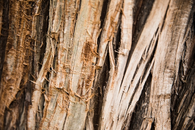 Textura de tronco de árvore close-up Foto gratuita
