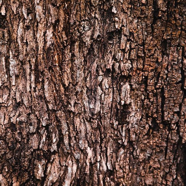 Textura de tronco de árvore close-up Foto Premium