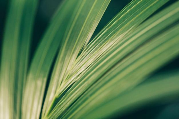 Textura de uma folha de palmeira Foto gratuita