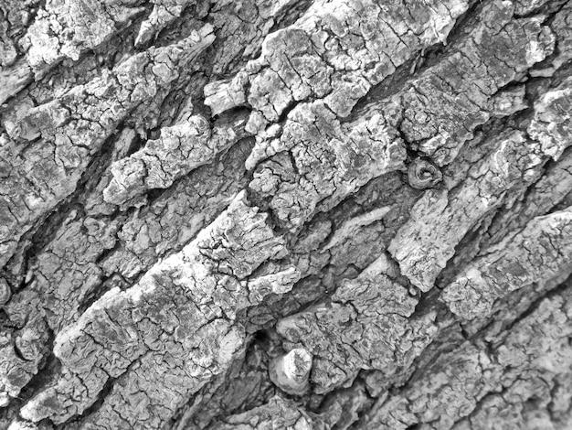 Textura do tronco da árvore Foto gratuita
