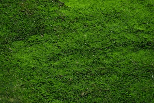 Textura e fundo verde musgo Foto Premium