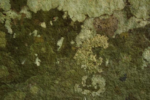 Textura e fundo verdes do musgo. Foto Premium