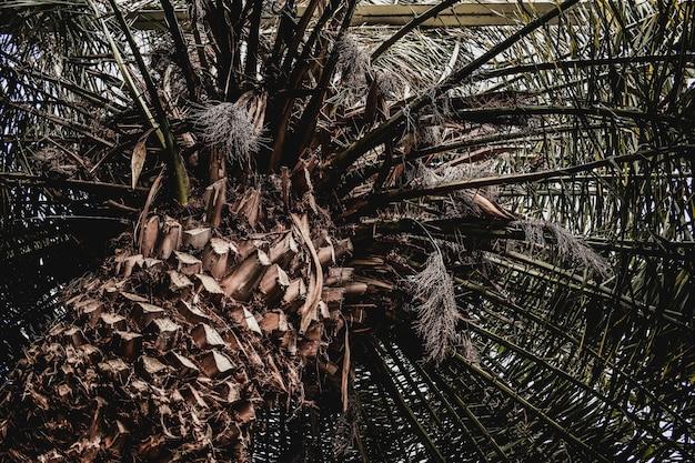 Textura tropical exótica de palma Foto Premium