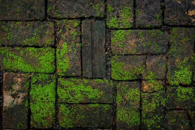 Textura verde do musgo e do fundo do tijolo bonita na natureza. Foto Premium