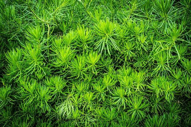 Texturas e superfície de planta verde árvore e folha Foto gratuita