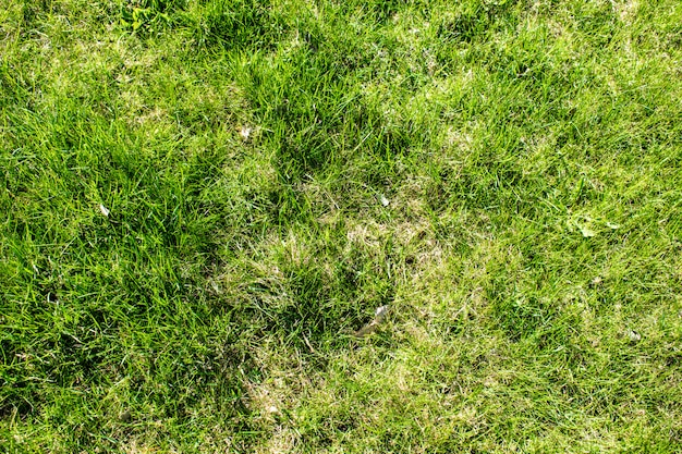 Texturas grama verde Foto Premium