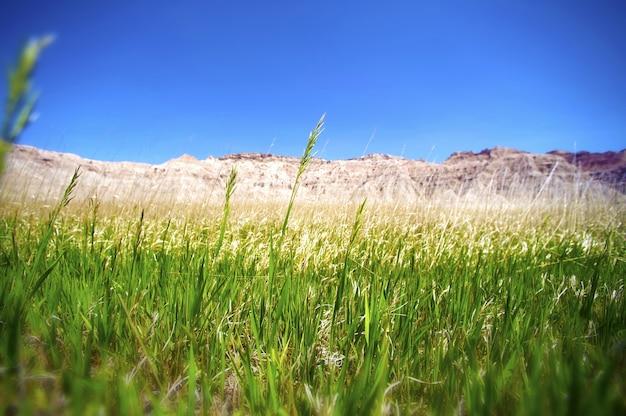 The grasslands Foto gratuita