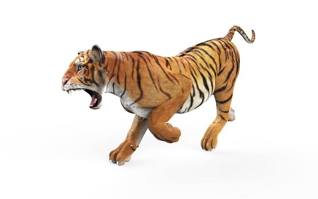Tigre de bengala perigoso em fundo branco com traçado de recorte Foto Premium