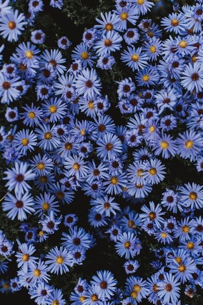 Tiro de ângulo alto de pequenas flores azuis Foto gratuita