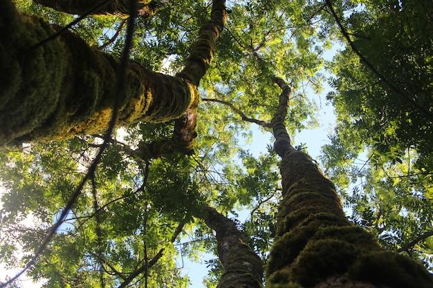 Tiro de ângulo baixo de árvores altas com folhas verdes sob o céu claro Foto gratuita
