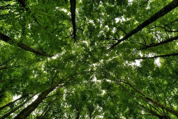 Tiro de ângulo baixo de árvores altas em uma bela floresta verde Foto gratuita