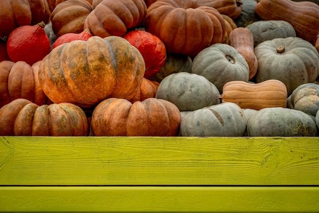 Tiro de ângulo baixo de muitas abóboras coloridas preenchidas em uma caixa de madeira verde Foto gratuita