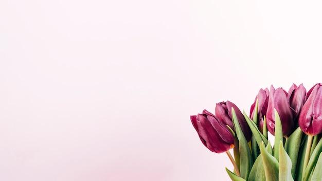Tiro de detalhe de tulipas frescas em fundo colorido Foto gratuita