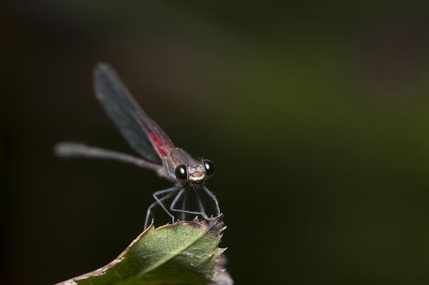 Tiro de foco seletivo de um inseto com asas de rede sentado em uma folha Foto gratuita