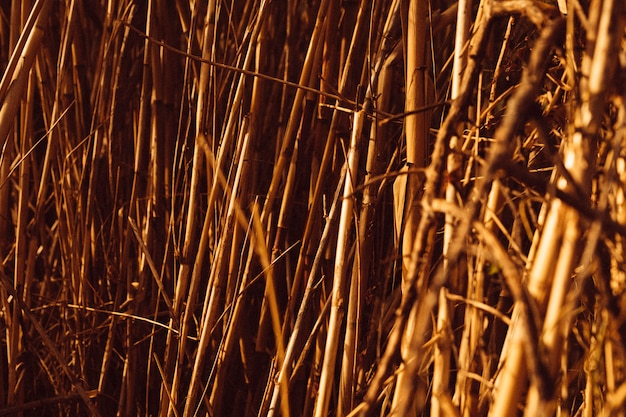 Tiro de quadro completo de canas marrons Foto gratuita