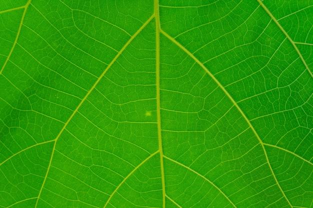Tiro de quadro completo de textura de folha verde. Foto Premium