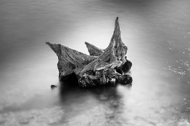 Tiro em escala de cinza de um pedaço de madeira no mar Foto gratuita