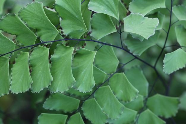 Tiro horizontal closeup de lindas folhas verdes Foto gratuita