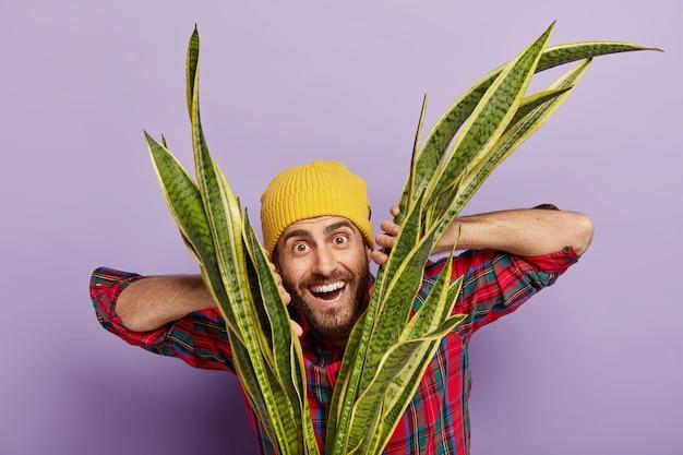 Tiro horizontal de feliz hipster com barba por fazer vestido de chapéu amarelo, camisa xadrez, planta de casa, estar interessado em botânica, sorri com alegria, isolado sobre a parede roxa. florista com sansevieria Foto gratuita