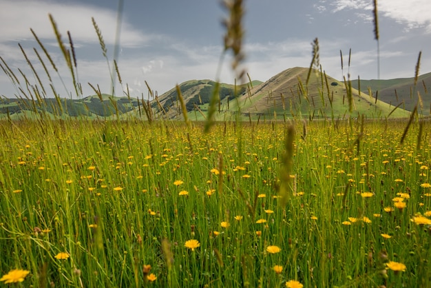 Tiro horizontal de lindas flores amarelas em um campo de grama, rodeado por altas montanhas na itália Foto gratuita