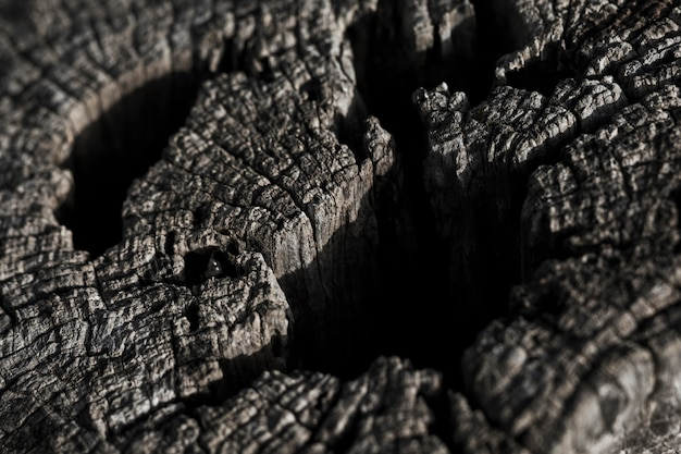Tiro macro de textura de madeira Foto gratuita