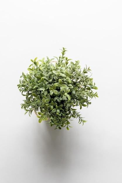 Tiro vertical aéreo de uma planta verde em uma superfície branca Foto gratuita