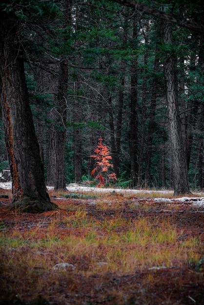 Tiro vertical da bela paisagem de outono em uma floresta cheia de árvores altas Foto gratuita