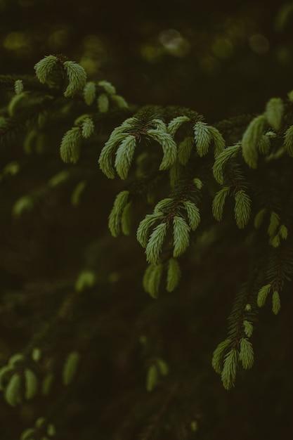 Tiro vertical da bela vegetação em uma floresta Foto gratuita