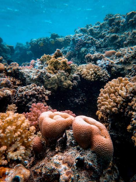 Tiro vertical de belos corais no fundo do mar Foto gratuita