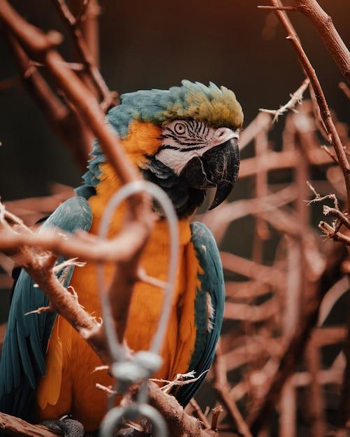 Tiro vertical de laranja colorido e um papagaio tropical exótico azul empoleirado em um galho de uma árvore Foto gratuita
