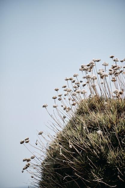 Tiro vertical de plantas que crescem na rocha com um céu azul ao fundo durante o dia Foto gratuita
