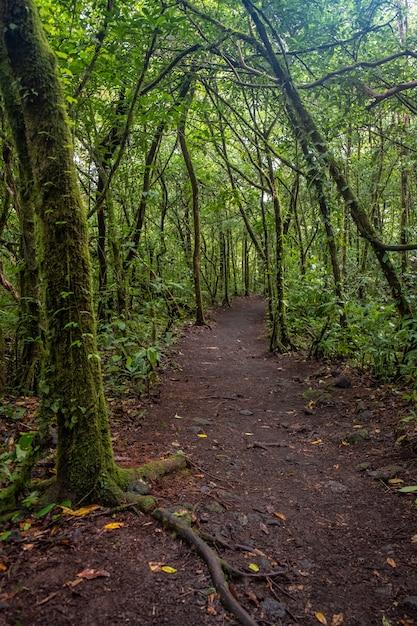 Tiro vertical de um caminho no meio da floresta verde Foto gratuita