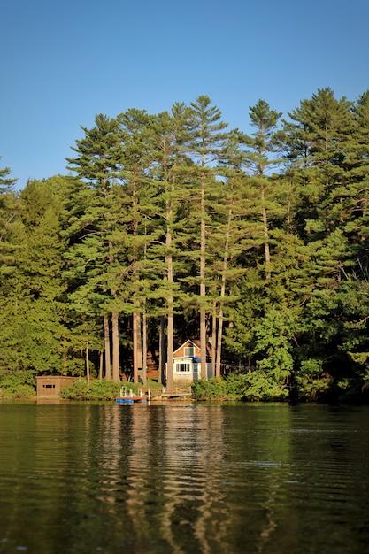 Tiro vertical de um lago e pinheiros em um dia ensolarado Foto gratuita