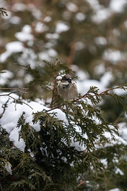 Tiro vertical de um pardal sentado em um galho de árvore coberto de neve Foto gratuita