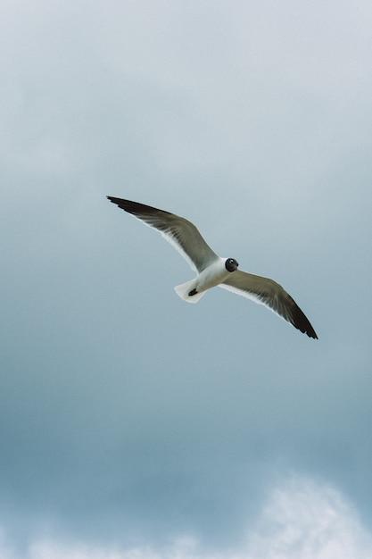 Tiro vertical de um pássaro voando no céu Foto gratuita