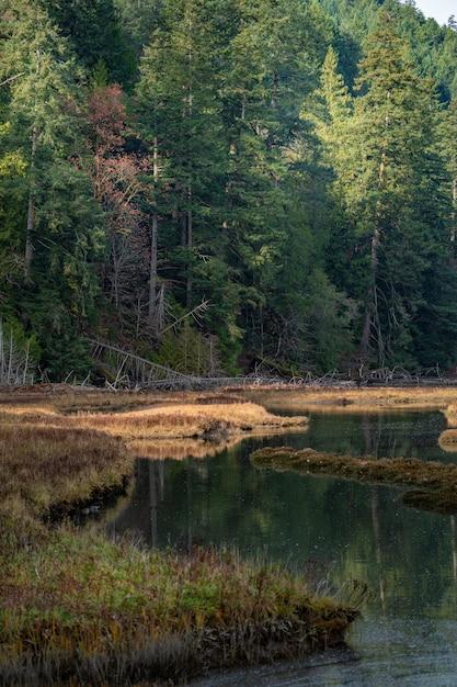 Tiro vertical de uma bela paisagem verde refletindo no lago no canadá Foto gratuita