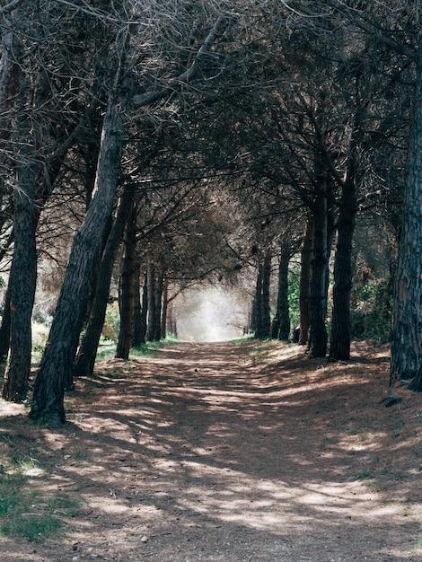 Tiro vertical de uma estrada de cascalho, atravessando as belas árvores em uma floresta Foto gratuita